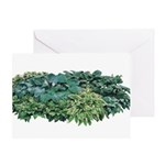 Hosta Clumps Greeting Card