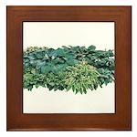 Hosta Clumps Framed Tile
