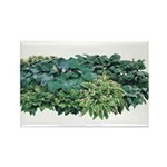 Hosta Clumps Rectangle Magnet (10 pack)