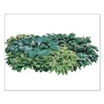 Hosta Clumps Small Poster