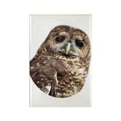 Northern Spotted Owl Rectangle Magnet
