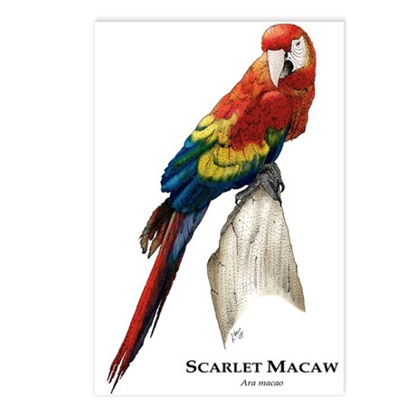 Scarlet Macaw Postcards (Package of 8)
