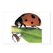 Ladybug and Aphid Postcards (Package of 8)