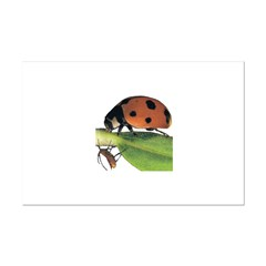 Ladybug and Aphid Posters