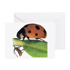 Ladybug and Aphid Greeting Cards (Pk of 10)