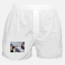 Creation & Tri Collie Boxer Shorts