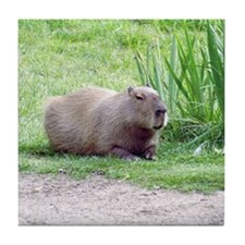 Capybara Laying Down Tile Coaster