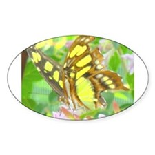 Malachite Butterfly Oval Decal
