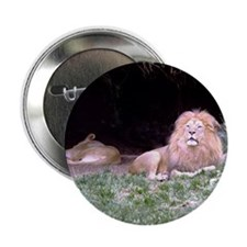 Lying Lions Button