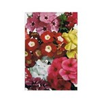 Mucho Phlox Rectangle Magnet (100 pack)