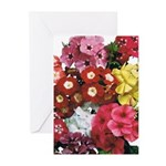 Mucho Phlox Greeting Cards (Pk of 10)