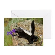 Skunk Greeting Cards (Pk of 10)