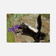 Skunk Rectangle Magnet