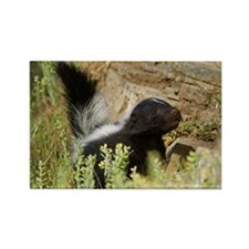Skunk Rectangle Magnet