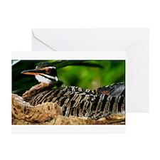 Sunbittern Greeting Cards (Pk of 10)
