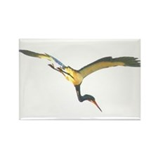 Tricolored Heron Rectangle Magnet