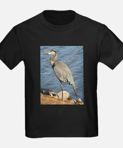 Great Blue Heron T