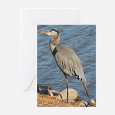 Great Blue Heron Greeting Cards (Pk of 10)