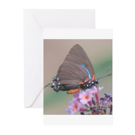 Great Purple Hairstreak Greeting Cards (Pk of 10)
