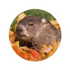 """Groundhog 3.5"""" Button (100 pack)"""