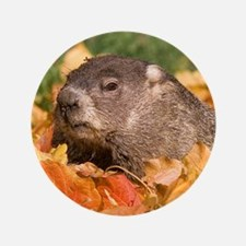 "Groundhog 3.5"" Button (100 pack)"