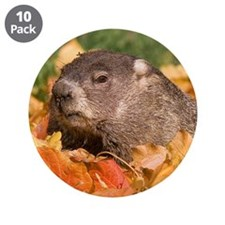 """Groundhog 3.5"""" Button (10 pack)"""
