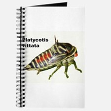 Oak Treehopper nymph Journal