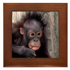 Orangutan Baby Framed Tile