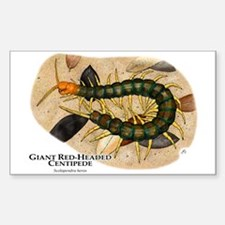 Giant Red-Headed Centipede Rectangle Decal