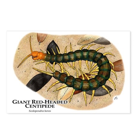 Giant Red-Headed Centipede Postcards (Package of 8