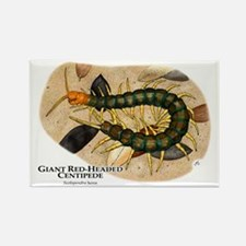 Giant Red-Headed Centipede Rectangle Magnet
