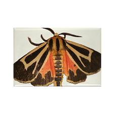 Tiger Moth Rectangle Magnet