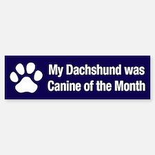 Dachshund of the Month Bumper Bumper Bumper Sticker