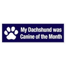 Dachshund of the Month Bumper Bumper Sticker