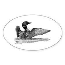 Painted Loon Oval Decal