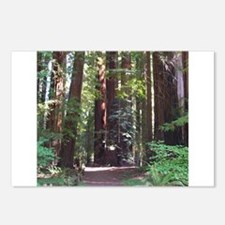 Redwood Trail Postcards (Package of 8)