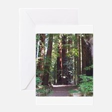 Redwood Trail Greeting Card