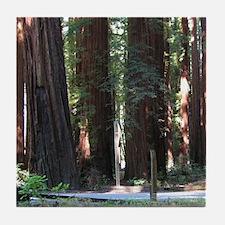 The Redwood Highway Tile Coaster