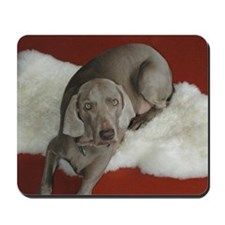 Beautiful AKC Champion Weimaraner photo Mousepad