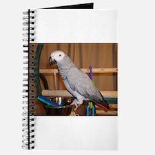 African Grey Journal