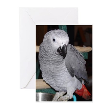 African Grey Greeting Cards (Pk of 10)