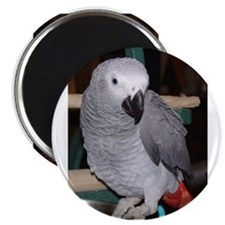 "African Grey 2.25"" Magnet (10 pack)"