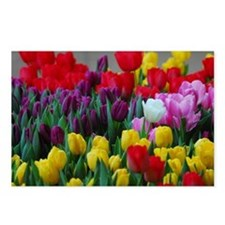 White Tulip Postcards (Package of 8)