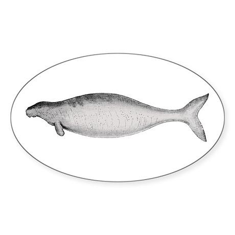 Steller's Sea Cow Oval Sticker
