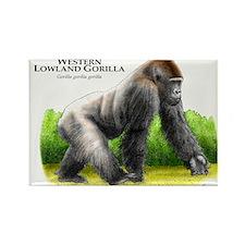 Western Lowland Gorilla Rectangle Magnet
