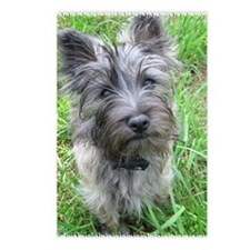 PUPPY CAIRN Postcards (Package of 8)
