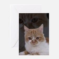 Dramatic Cat Greeting Cards