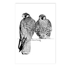 Prairie Falcons Postcards (Package of 8)