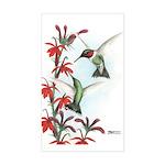 Ruby-throated Hummingbirds Rectangle Sticker