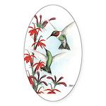 Ruby-throated Hummingbirds Oval Sticker